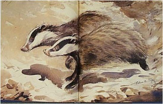 Soper When Badgers Wake