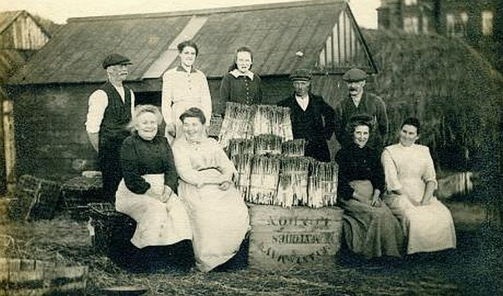 A group of workers from Aindows asparagus farm Formby