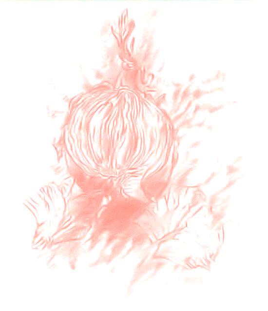 Guter Grass, Onion