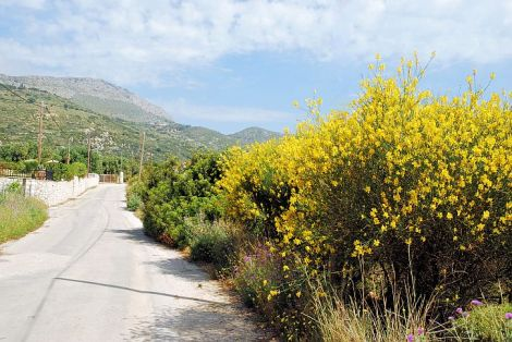 The road to Old Skala