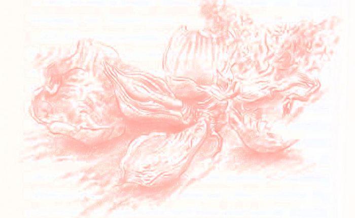 Peeling the Onion: Gunter Grass has the lastword
