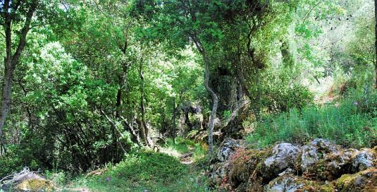 The path up to old Sami