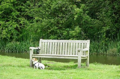 At Dean locks: the waiting dog