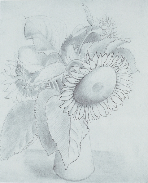 Drawing of a Sunflower, c1930s