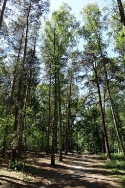 A walk in Berlin's Green Forest