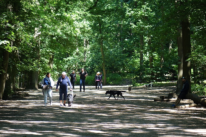 Grunewald dog heaven