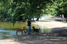Dog heaven: by the Grunewaldsee