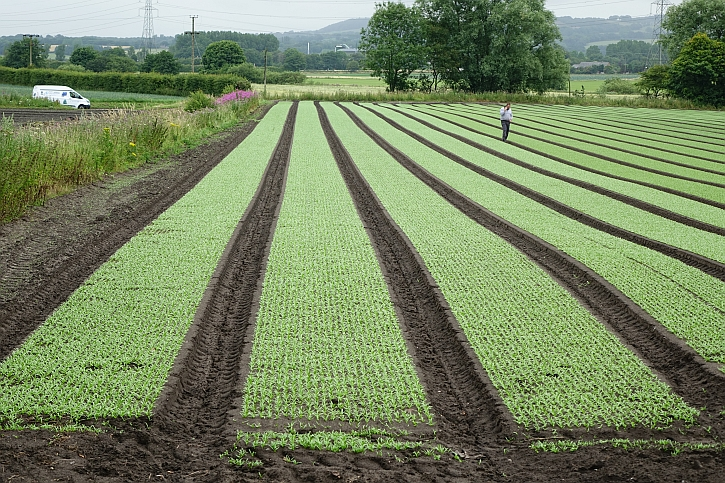 Lancashire flatlands 2