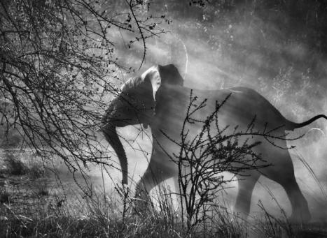 Genesis: Elephants in Kafue National Park. Zambia, 2010