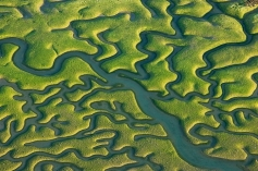 Héctor Garrido Wetlands of San Fernando, Cádiz
