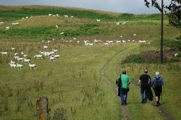 Walking Offa's Dyke path: a group lacking a credible leader