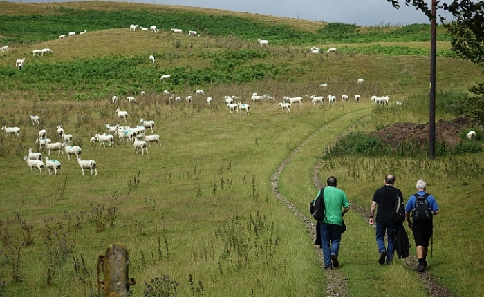 Walking Offa's Dyke path: a group lacking a credible leader
