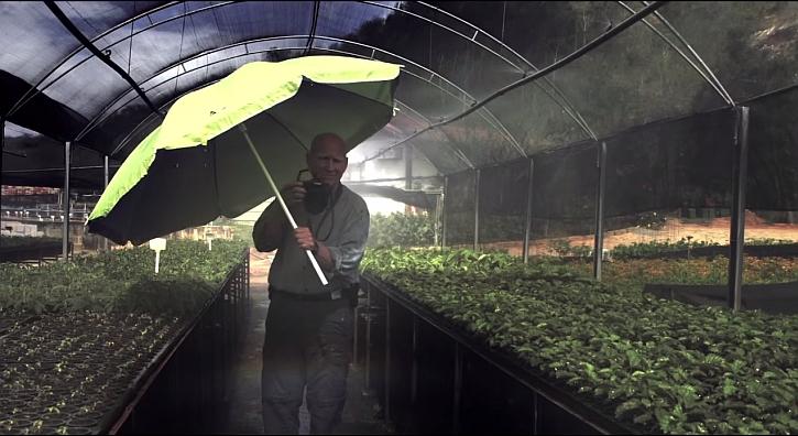 Salgado and seedlings at the Instituto Terra