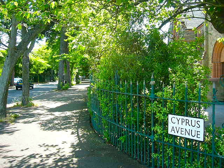 Cyprus Avenue: 'Way up on .... the avenue of trees'