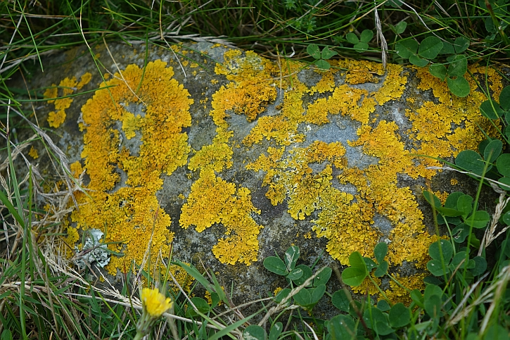 Lichen near the shore