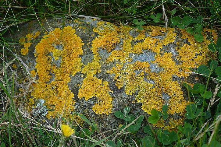 Lichen near the shore