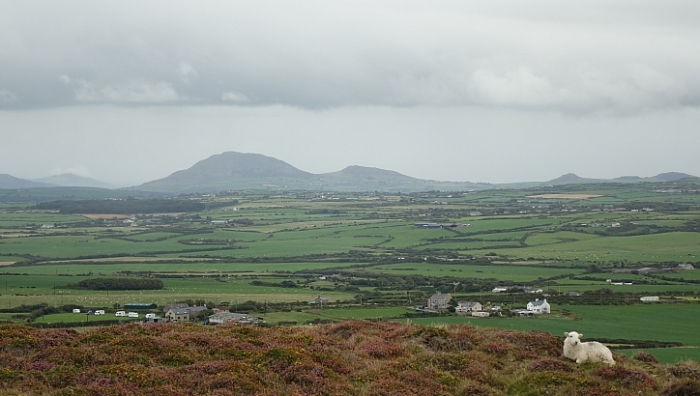 Lleyn walks: wind and rain on Mynydd Anelog