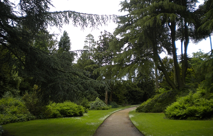 The Pinetum