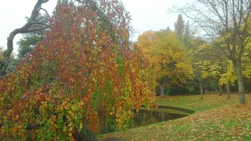Autumn colour Sefton Park 2