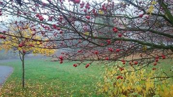 Autumn colour Sefton Park 3