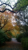 Autumn colour Sefton Park