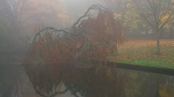 Mist in Sefton Park 2