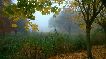 Mist in Sefton Park 4