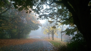 Mist in Sefton Park 5