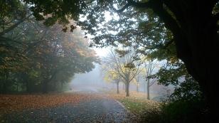Mist in Sefton Park 5
