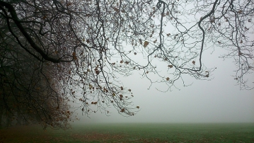 Mist in Sefton Park 6
