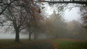 Mist in Sefton Park