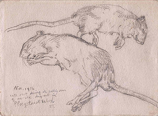 'November 1916, Rats shot during the pulling down of an old dugout in Ploegsteert Wood'