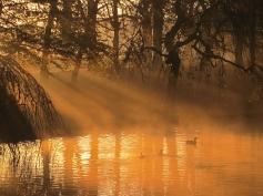 Lower Brook sunrise