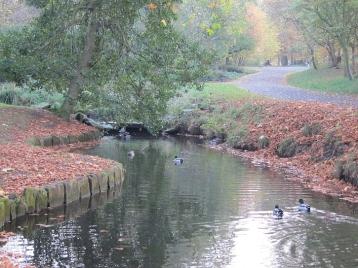 Upper Brook 2