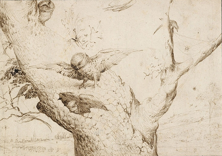Hieronymus Bosch, The Owl's Nest, drawing
