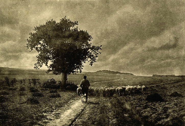Adriaan Boer, Towards the fold, 1905