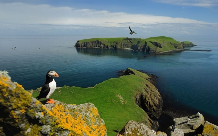 Puffins on the Shiant Islands