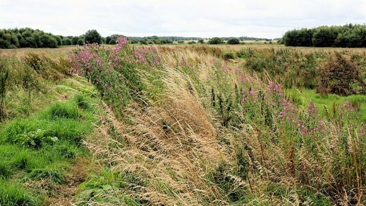 Lunt Meadows landscape 2