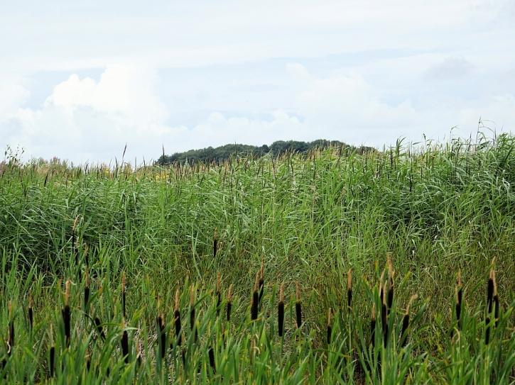 Lunt Meadows landscape