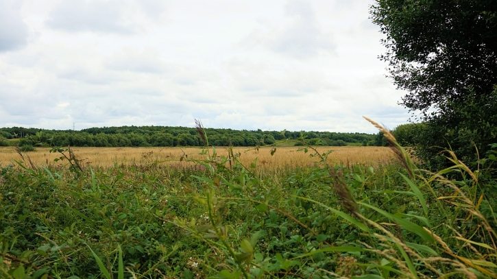Lunt Meadows landscape