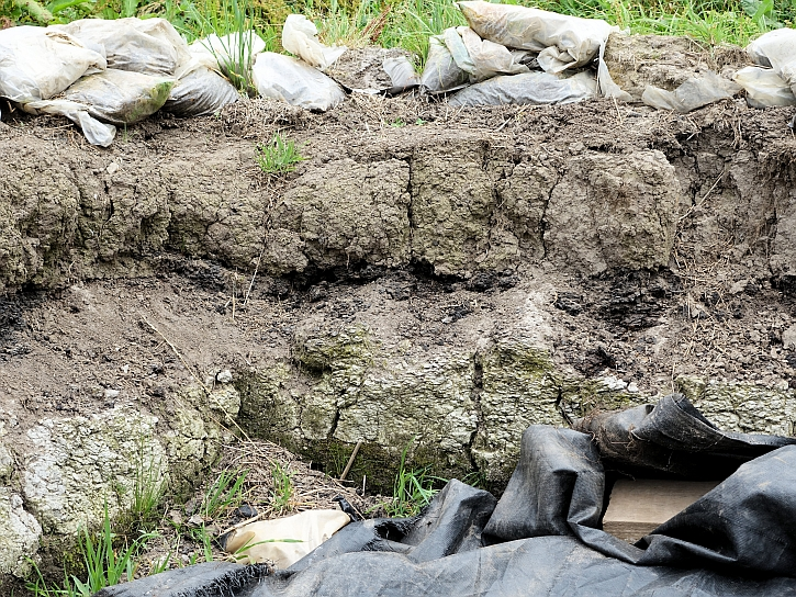 Peat deposits overlay the lighter, sandy soils of the Mesolithic at Lunt Meadows