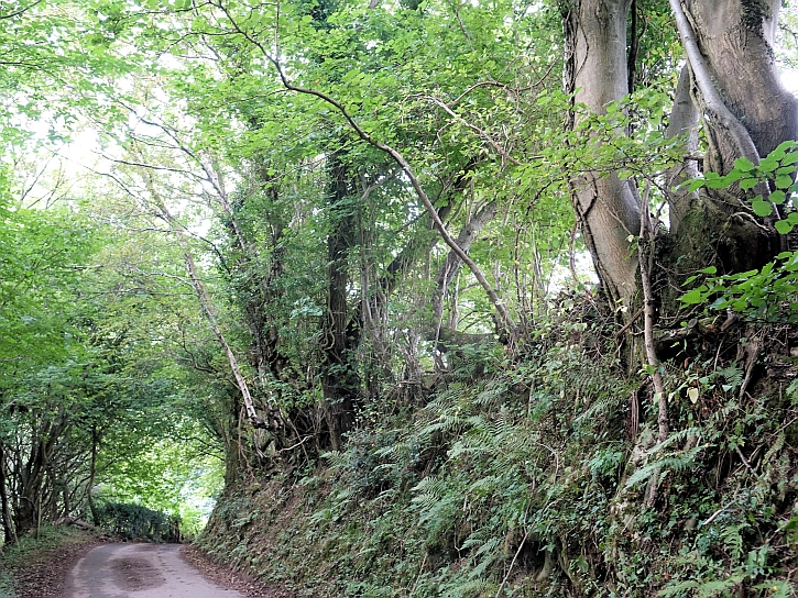 Capel y ffin: the lane that leads to the monastery