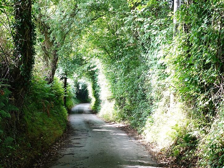 The lane at Coed-y-Cerrig