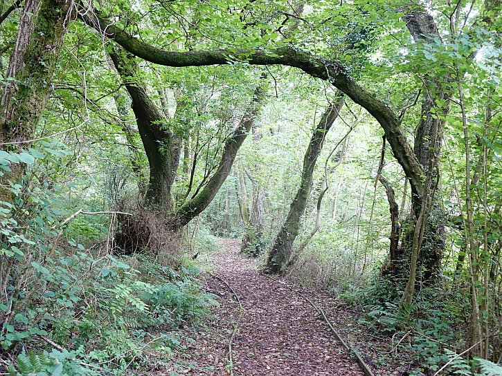 The woodland path in Coed-y-Cerrig Nature Reserve
