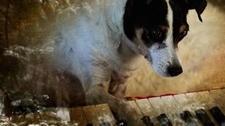 Lolabelle in Laurie Anderson's 'Heart of a Dog'