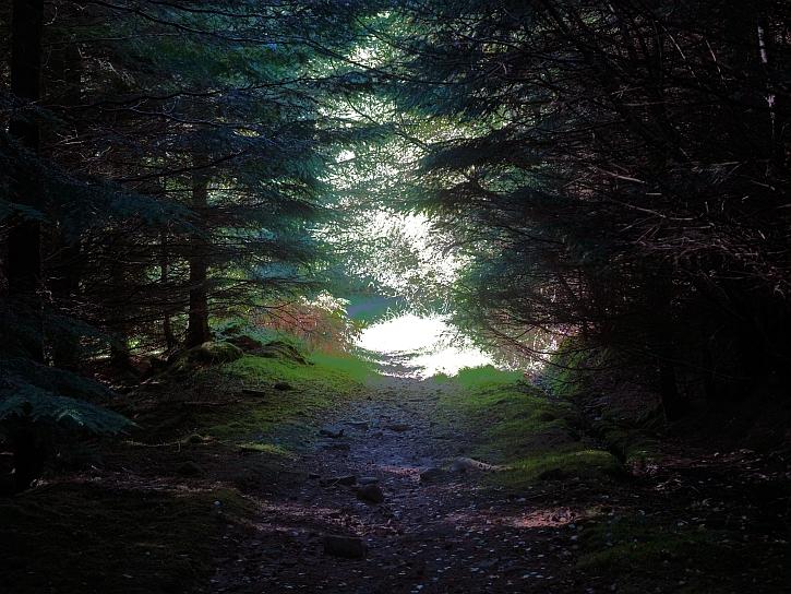 In the forest of Mynnyd Ddu