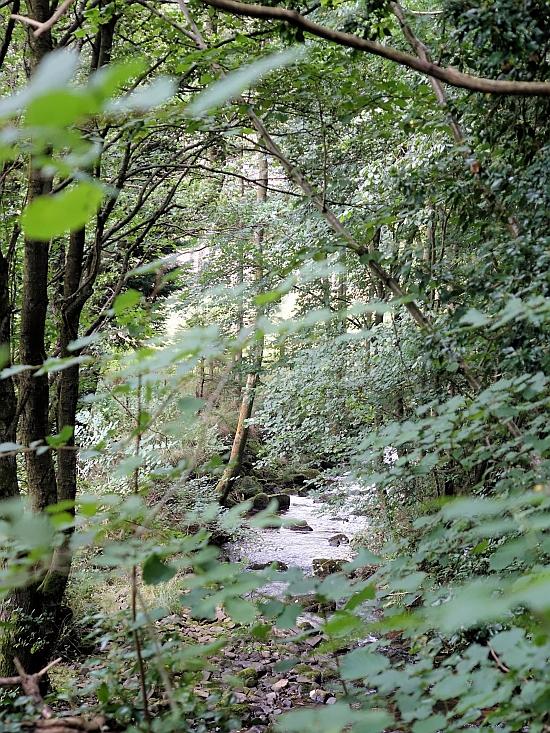 The Nant Bwch stream at Capel y ffin