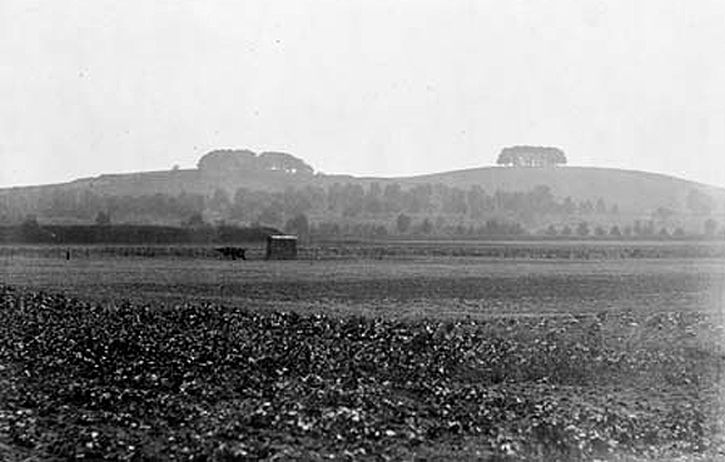 Wittenham Clumps in 1912 by  landscape photographer Henry Taunt