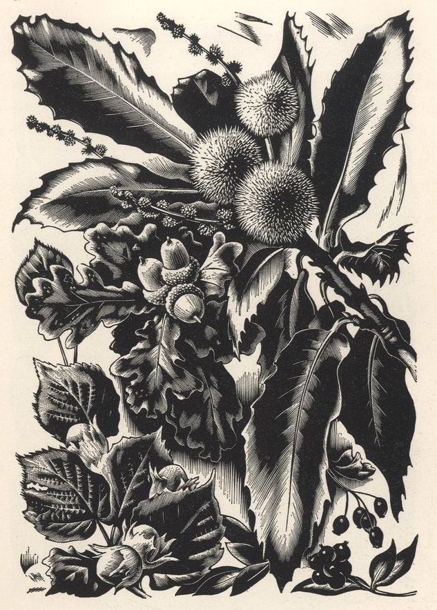Agnes Miller-Parker, Acorns, from 'Through the Woods'