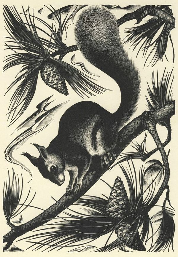 Agnes Miller-Parker, Red squirrel and pine cones, from 'Through the Woods'